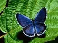 farfalla_4
